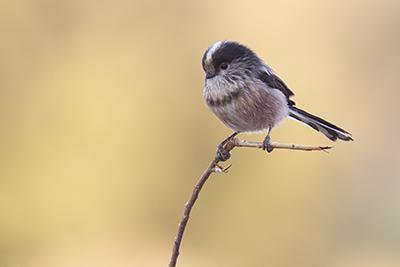 Vogels kijken in Extremadura