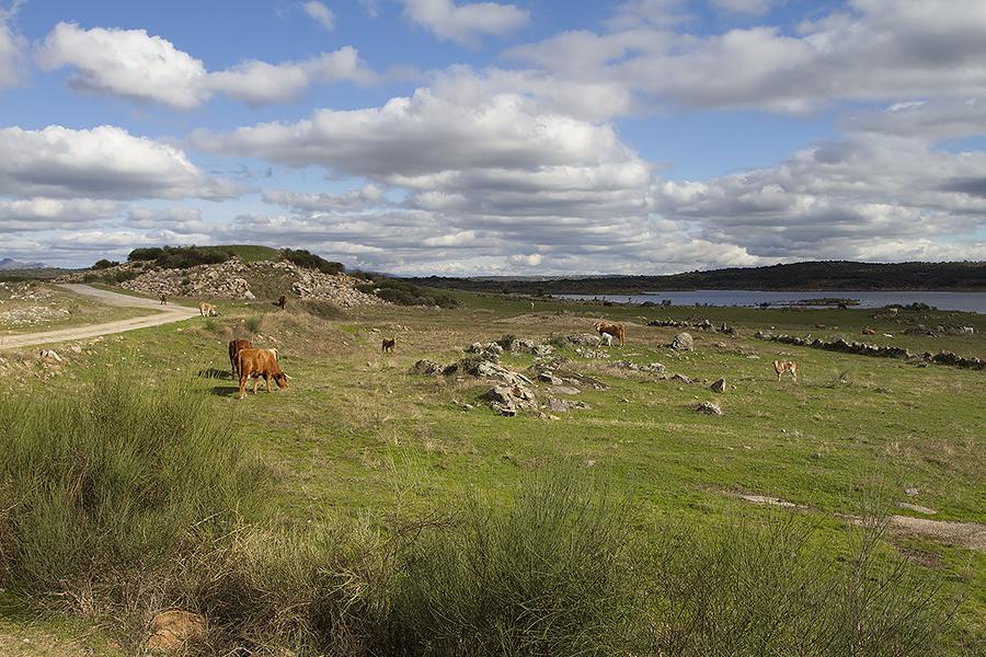 Struinen tussen koetjes en kalfjes aan het stuwmeer van Búrdalo