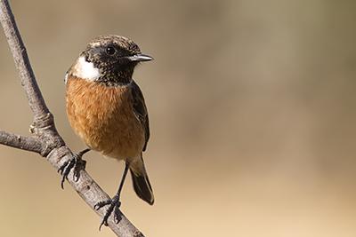 vogelfotografie vanuit een schuilhut